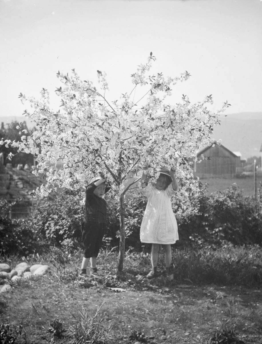 To barn ved et blomstrende frukttre