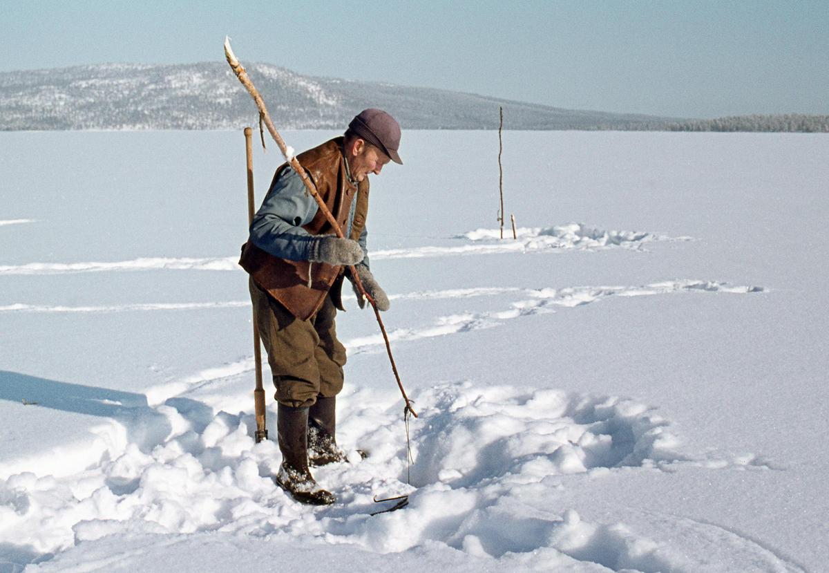 Åsmund Kolbu som fanger lake med fiskesaks på Isteren i Engerdal i 1977.