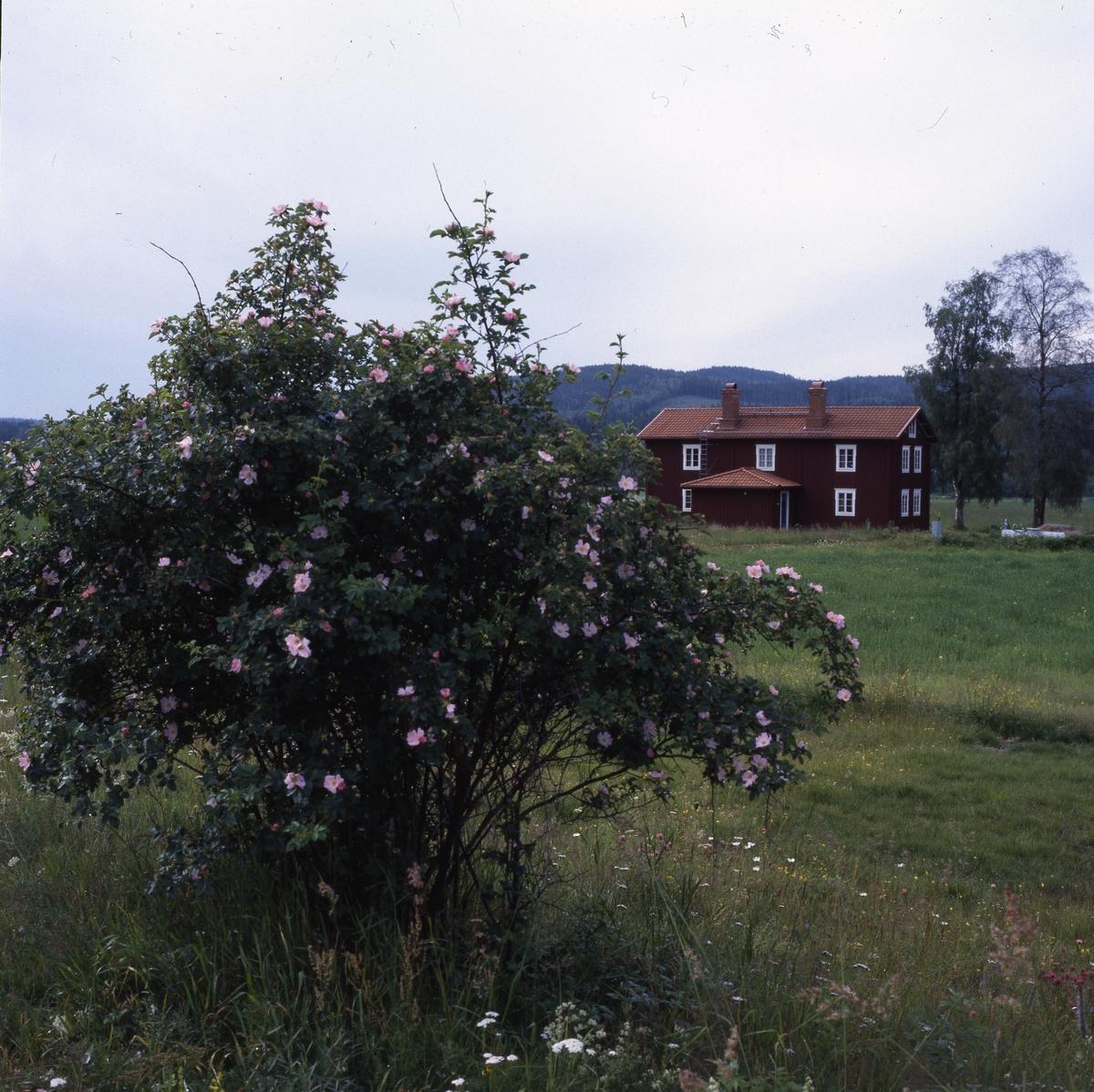 HMM59915