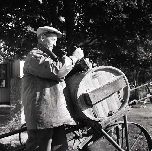 Skräddare - Johan Jonsson, Glösbo, kollar vätskemängden på potatisbesprutningsbehållaren, augusti 1957.
