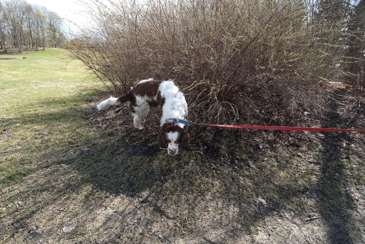 Hunden Balder på tur. B