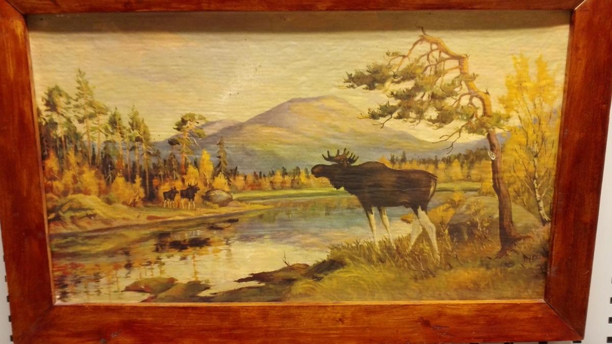 Skoglandskap - Elgar ved eit tjern.