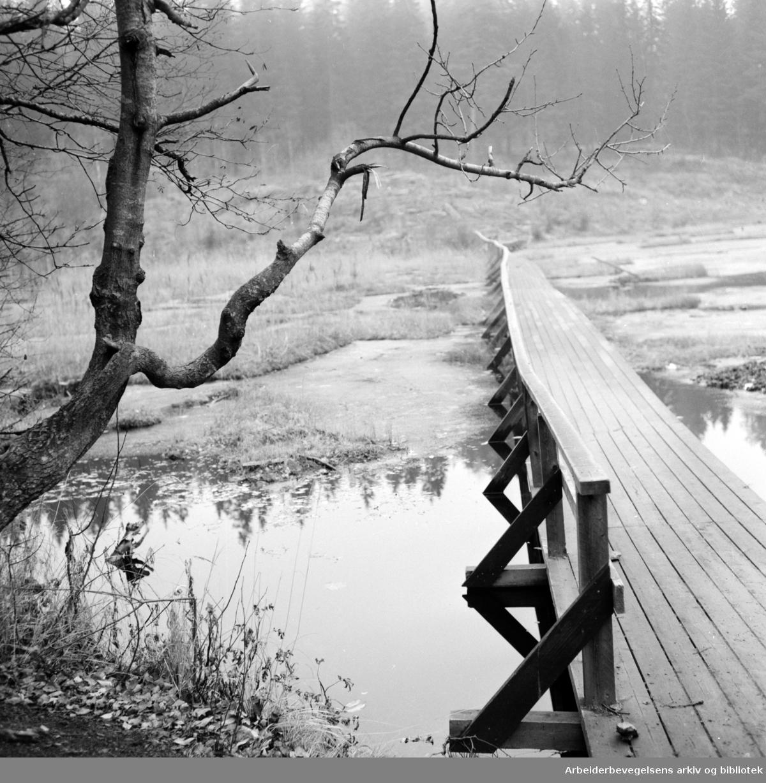 Nordmarka: Trollvann i Lillomarka. Høststemning. Oktober 1960