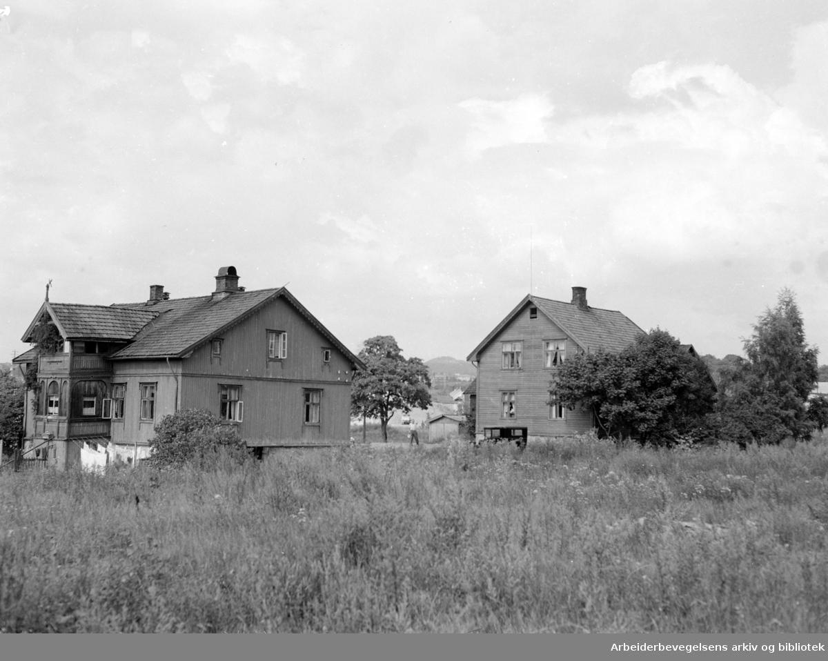 Haslelund. August 1955