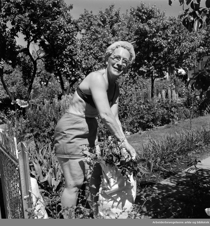Etterstad Kolonihage feirer 60 års jubileum. Fru Hildur Gramstad har hatt parsell i kolonihagen i to år. Juni 1968.