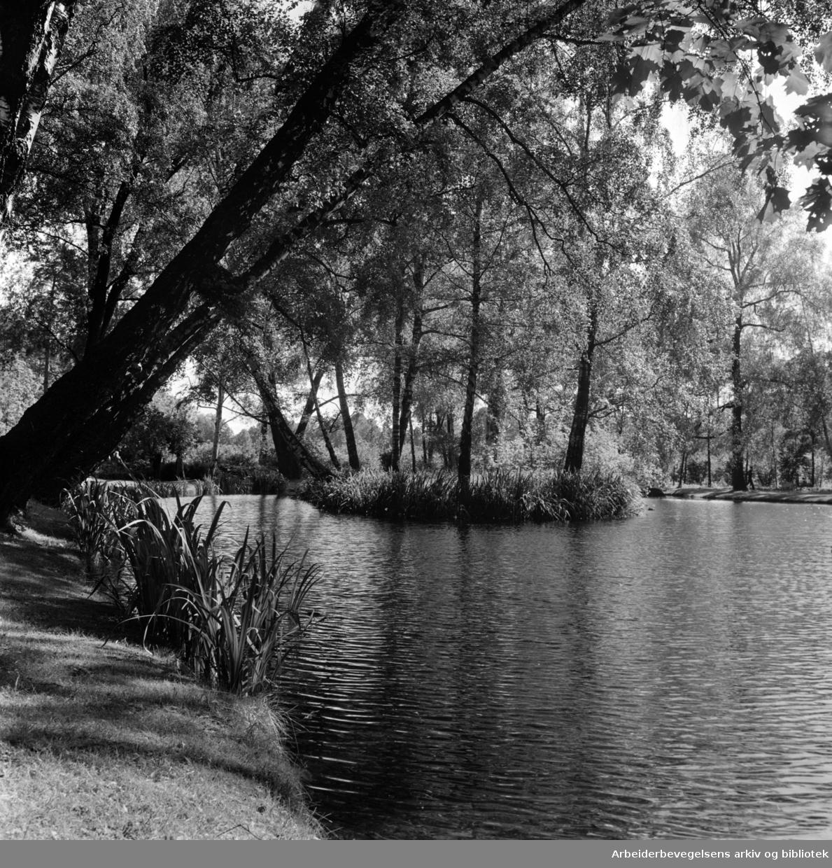Bygdøy Kongsgård. Parken åpen for publikum. Juli 1964