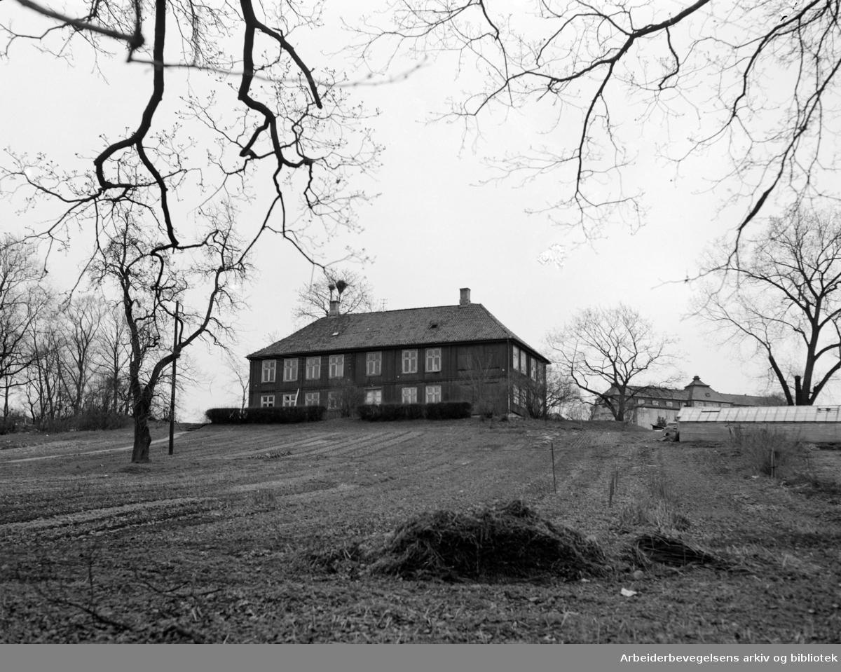 Bellevue på Tøyen. Mai 1955