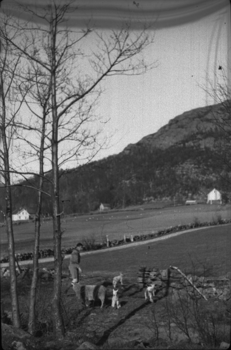 Wilhelm Hatleskog og Finn Johannessen på motorsykkeltur mellom Tau og Fiskå. Det er bilder fra en flokk med lam og sauer, en gård, et passasjerskip og landskapet. Wilhelm Hatleskog er på bilde 10 og 12 og Finn Johannessen er på bilde 5, 15 og 16.