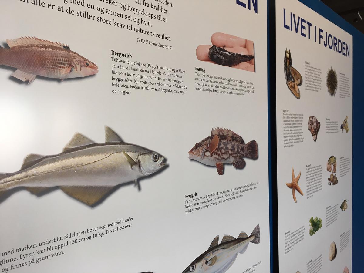 fisk.jpg