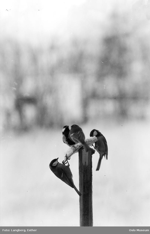fugler, fuglemat, snø