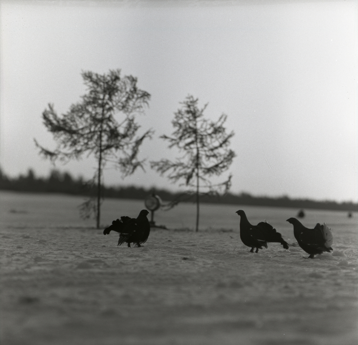 Tre orrar på marken med träd och strålkastare i bakgrunden vid F15 i Söderhamn, 1957.