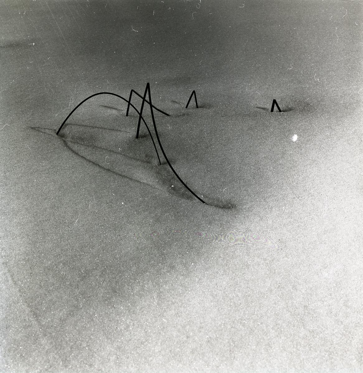 Några strån sticker upp ur snön vid Stråsjön, 7 april 1979.