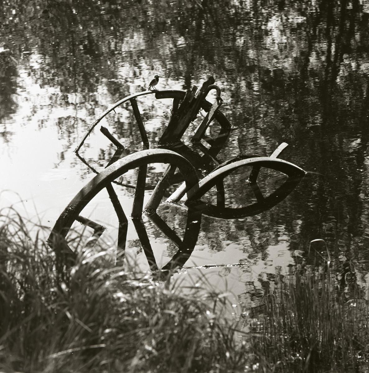 En sädesärla sitter på ett hjul i ett vattendrag, sommaren 1965.