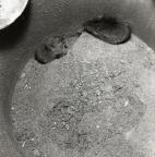 Två sorkar i en flödvattenbrunn, juli 1959.