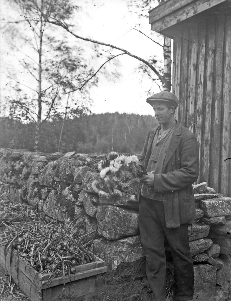 """Erik """"Lill-Erik"""" Johansson, son till Johannes Johansson, gör iordning produkter till försäljning på torget i Alingsås. Torgförsäljning ingick i trädgårdsarbetet.   Erik Johansson arbetade mestadels i Österbodarnes trädgård."""