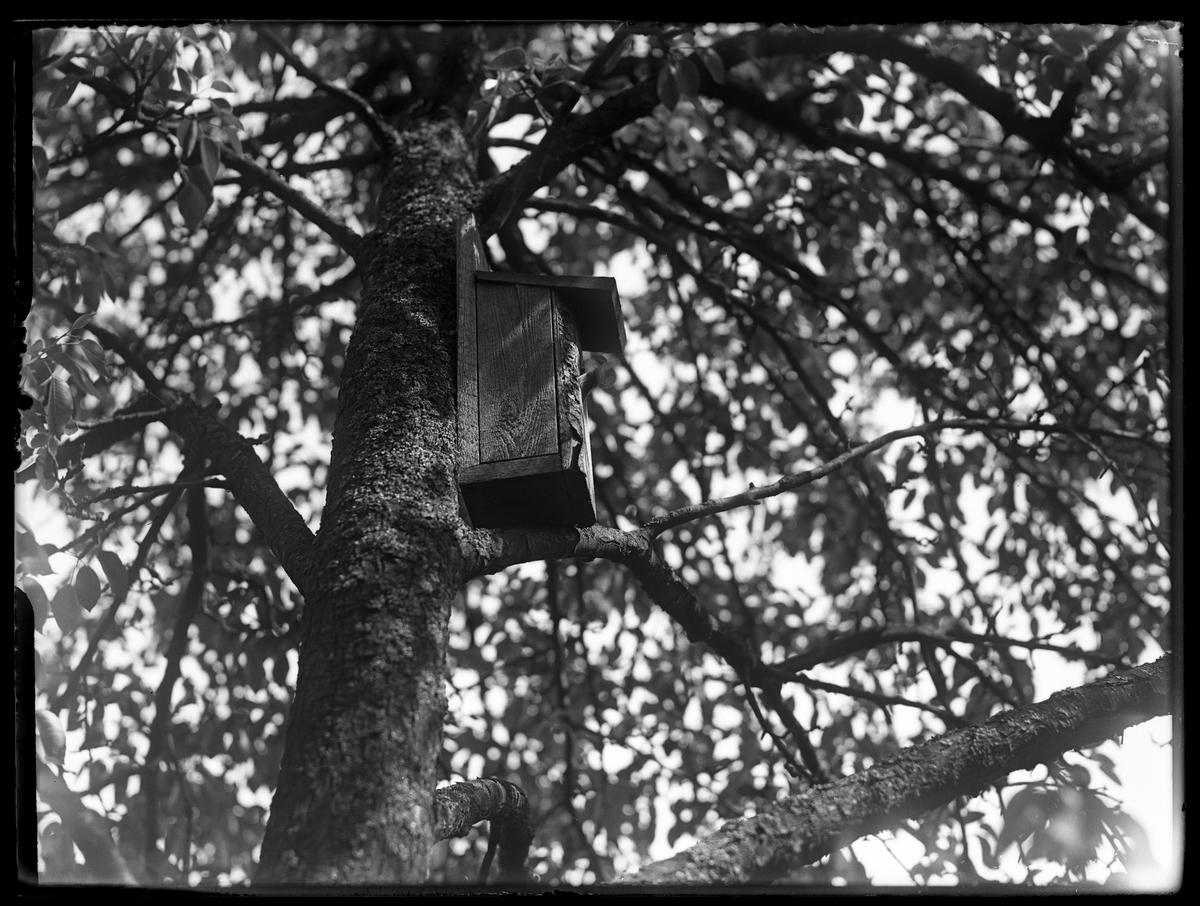 I ett träd sitter en fågelholk med en flugsnappare.