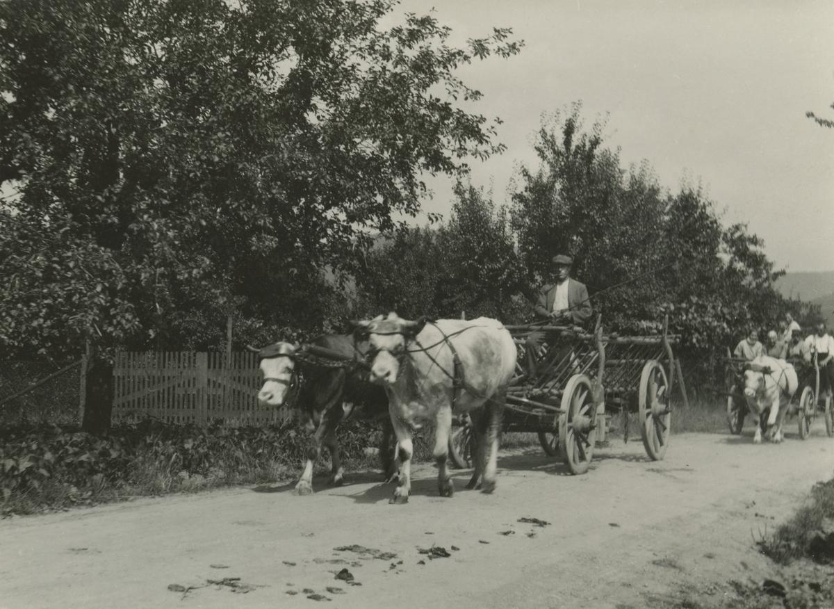 Motiv av noen bønder med okse og kjerre som kjører på landeveien ved Baden og Heidelberg.
