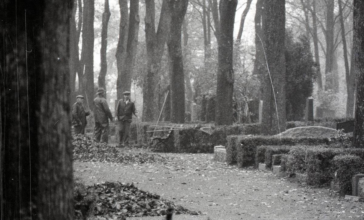 Kyrkogårdsarbetare krattar löv, Uppsala gamla kyrkogård, Uppsala 1961