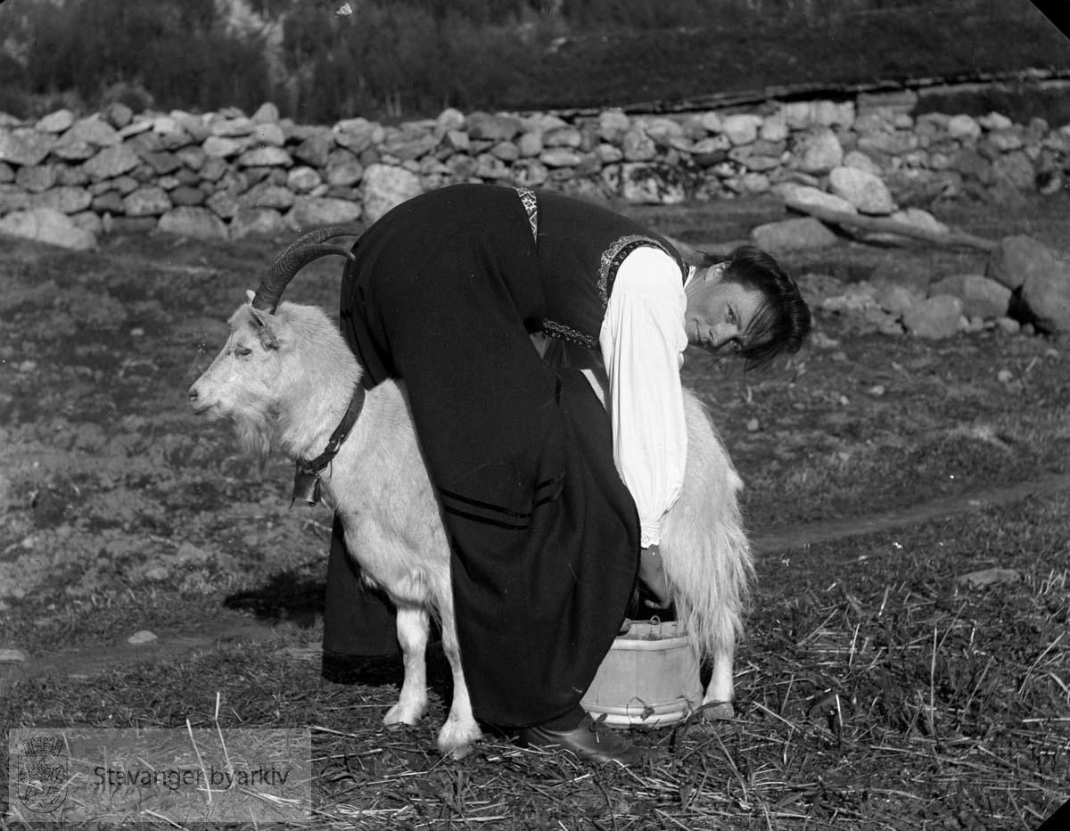 Kvinne i bunad melker geit