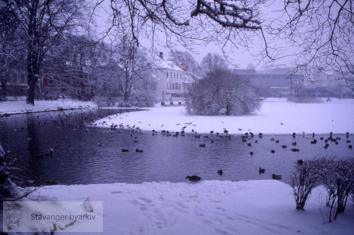 Fugleliv i vinterkledd bypark