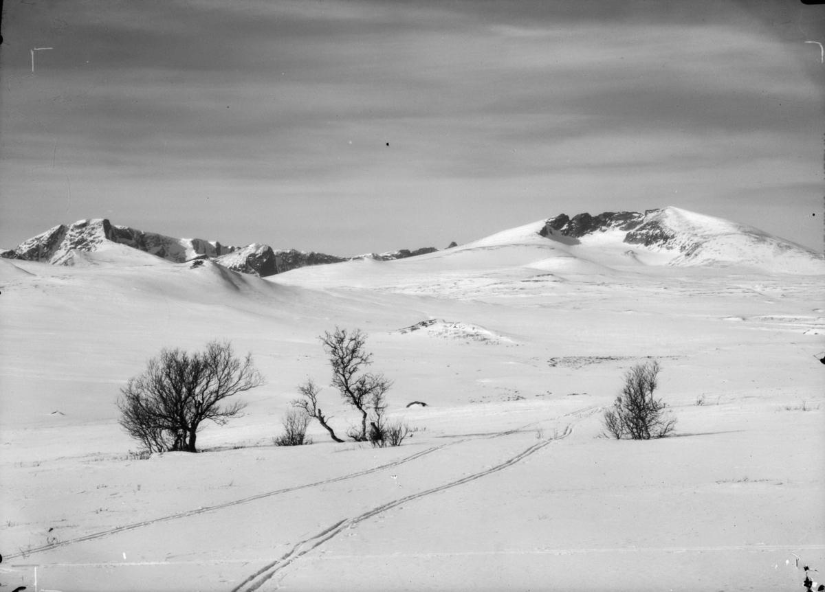 Dovrefjell, skispor not Snøhetta til høyre og Svånåtindan mot venstre