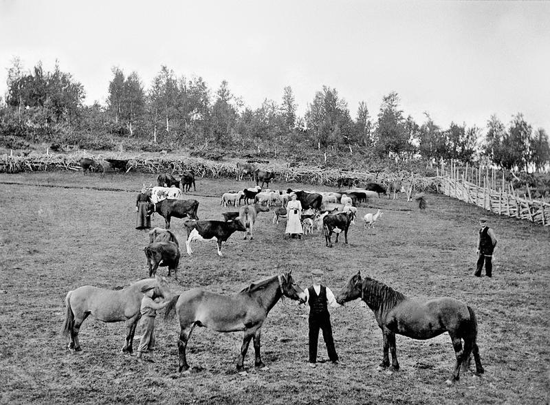 Eggengvollen, Langsetra, Vingelen. MINØ.114161. Foto: Engebret Lunaas/Anno Musea i Nord-Østerdalen (Foto/Photo)