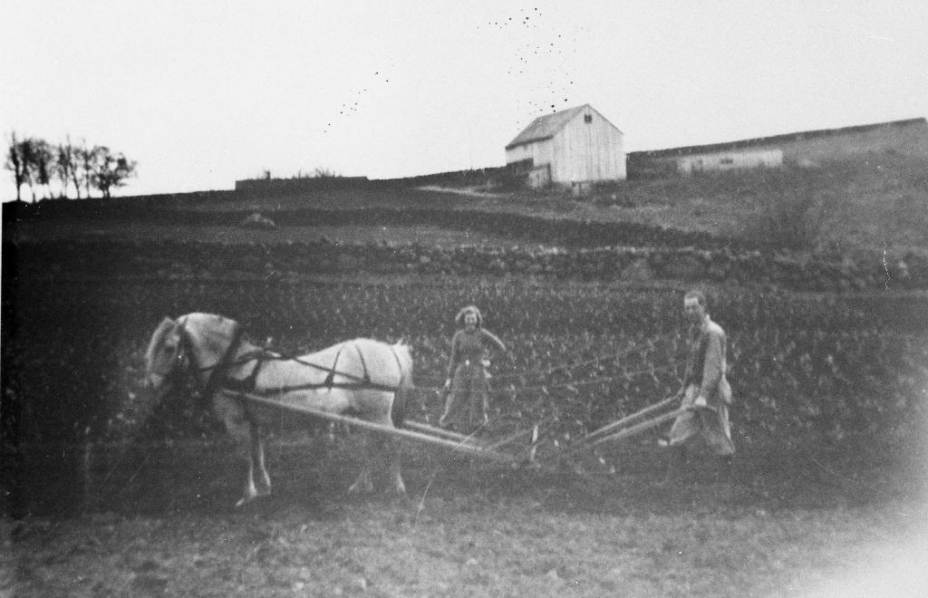 Kålålantimg på Rossaland. Elsa Tunheim g. Serigstad og broren Olav Tunheim med hest og hyppa. I bakgrunnen løa til Sven Tunheim.