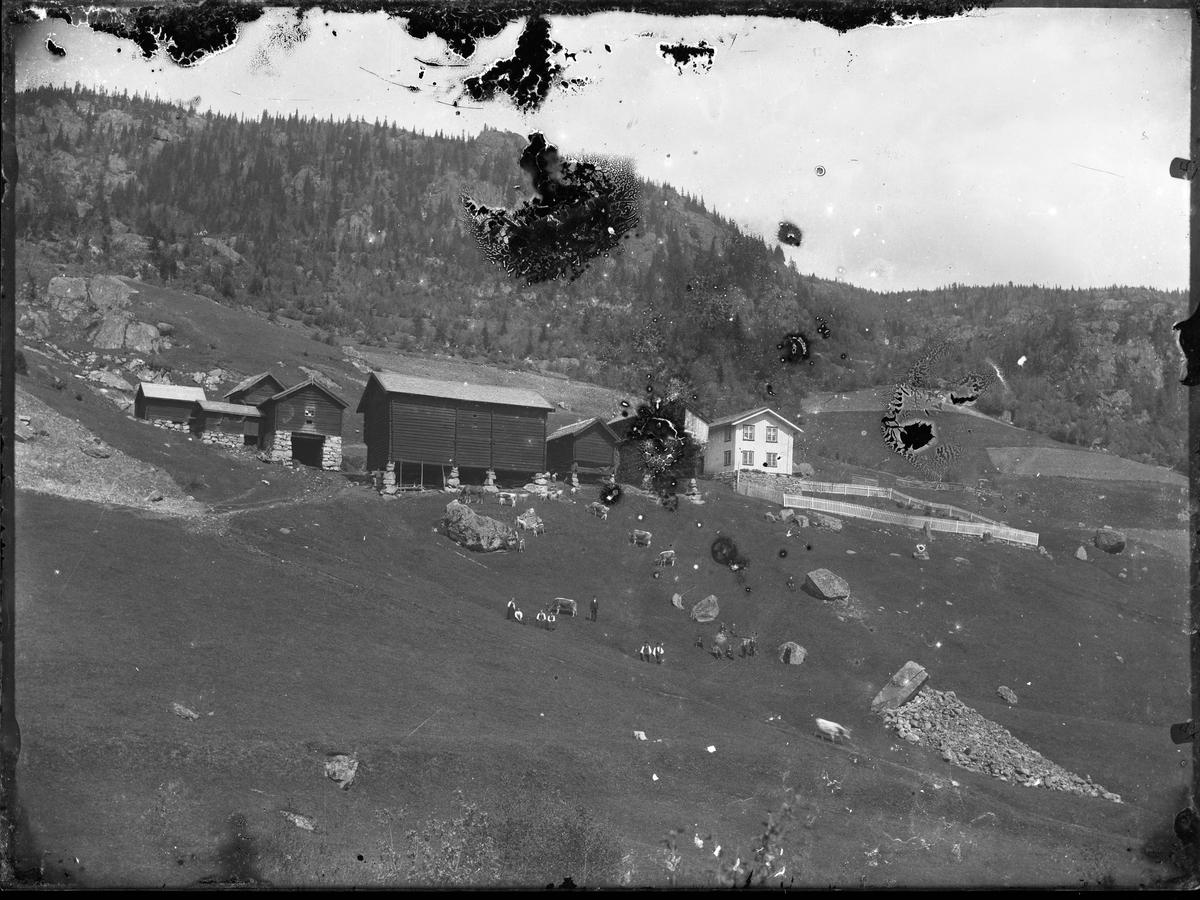 """Fotosamling etter Øystein O. Kaasa. (1877-1923). Gårdsbebyggelse, gården Kleiv i Morgedal Kaasa ble født i Bø i Telemark på husmannsplassen Kåsa under Vreim. Han gikk først i lære som møbelsnekker, forsøkte seg senere som anleggsarbeider og startet etterhvert Solberg Fotoatelie i Seljord, (1901-1923). Giftet seg i 1920 med Sigrid Pettersen fra Stavern. Han ble av mange kalt """"Telemarksfotografen"""". Kaasa fikk to sønner Olav Fritjof (1921-1987) og Erling Hartmann f 1923. Olav Fritjof ble fotograf som sin far, og drev Solberg Foto i Staven 1949, Sarpsborg 1954 og Larvik fra 1960. Hans sønn igjen John Petter Solberg drev firmaet frem til 1990."""