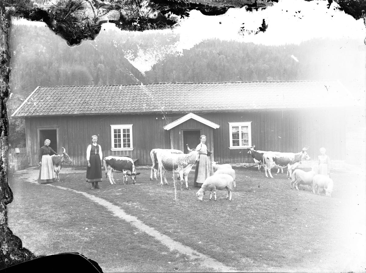 """Fotosamling etter Øystein O. Kaasa. (1877-1923). Gårdsbebyggelse, med seterjenter og telemarkskyr. Kaasa ble født i Bø i Telemark på husmannsplassen Kåsa under Vreim. Han gikk først i lære som møbelsnekker, forsøkte seg senere som anleggsarbeider og startet etterhvert Solberg Fotoatelie i Seljord, (1901-1923). Giftet seg i 1920 med Sigrid Pettersen fra Stavern. Han ble av mange kalt """"Telemarksfotografen"""". Kaasa fikk to sønner Olav Fritjof (1921-1987) og Erling Hartmann f 1923. Olav Fritjof ble fotograf som sin far, og drev Solberg Foto i Staven 1949, Sarpsborg 1954 og Larvik fra 1960. Hans sønn igjen John Petter Solberg drev firmaet frem til 1990."""
