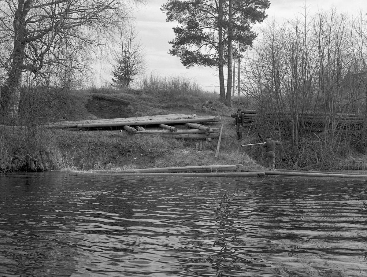 Tømmervelte med lensetømmer på Glommas østre bredd, ikke langt fra Elverum Prestegard. Her ble det vanligvis fløtet tømmer fra begynnelsen av mai til slutten av juli, i år med lav sommervannføring opptil en måned lengre. Dette fotografiet ble tatt fra en båt på vannet under forberedelsene til 1984-sesongen. I elveskråningen ser vi restene av ei florlagt velte, men mange av lensestokkene var allerede rullet ned elveskråningen og lå i strandsonen der de skulle kjedes sammen til ei ledelense. To av de fem fløterne som arbeidet på den 6 kilometer lange strekningen mellom Søstuvika og Hanstadholmen befant seg i elveskråningen da dette bildet ble tatt.   En kort omtale av Prestegardslensa finnes under fanen «Andre opplysninger».