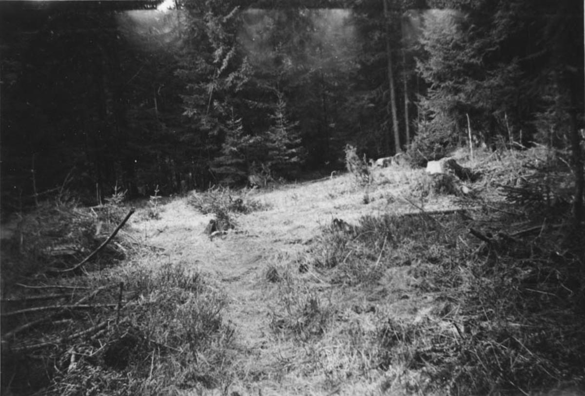 Rydning i skogen.