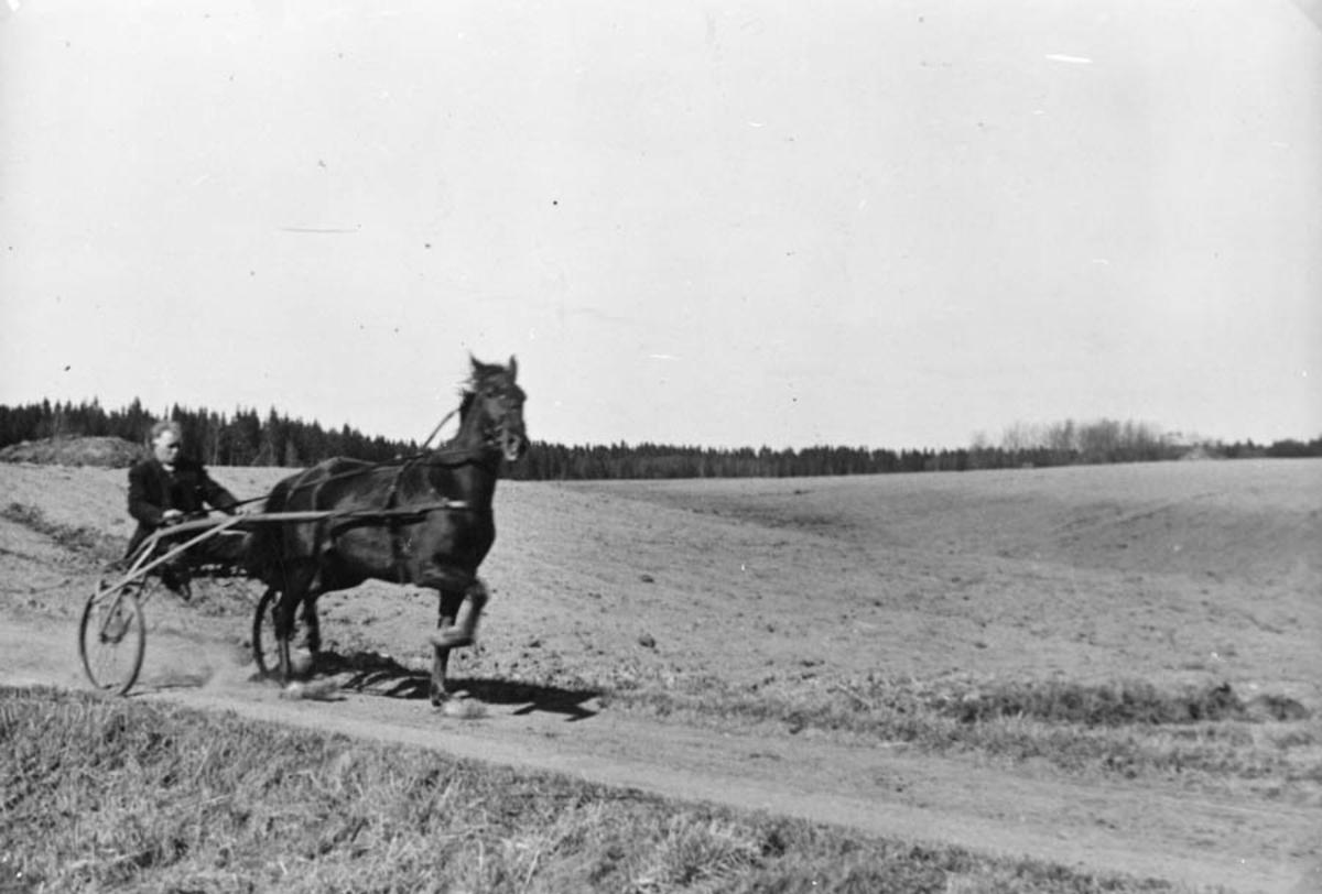 Hest med sulky og kjører, på vei.