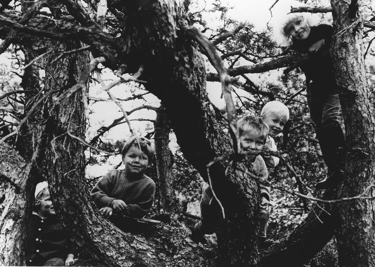 Fem barn i et tre.