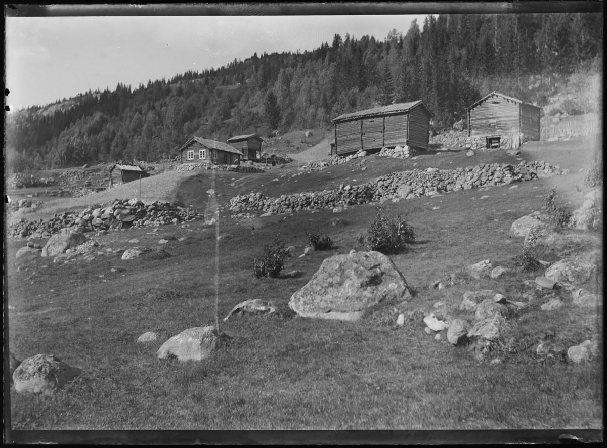 Bilde av en del kuer og kalver på ei sæter.