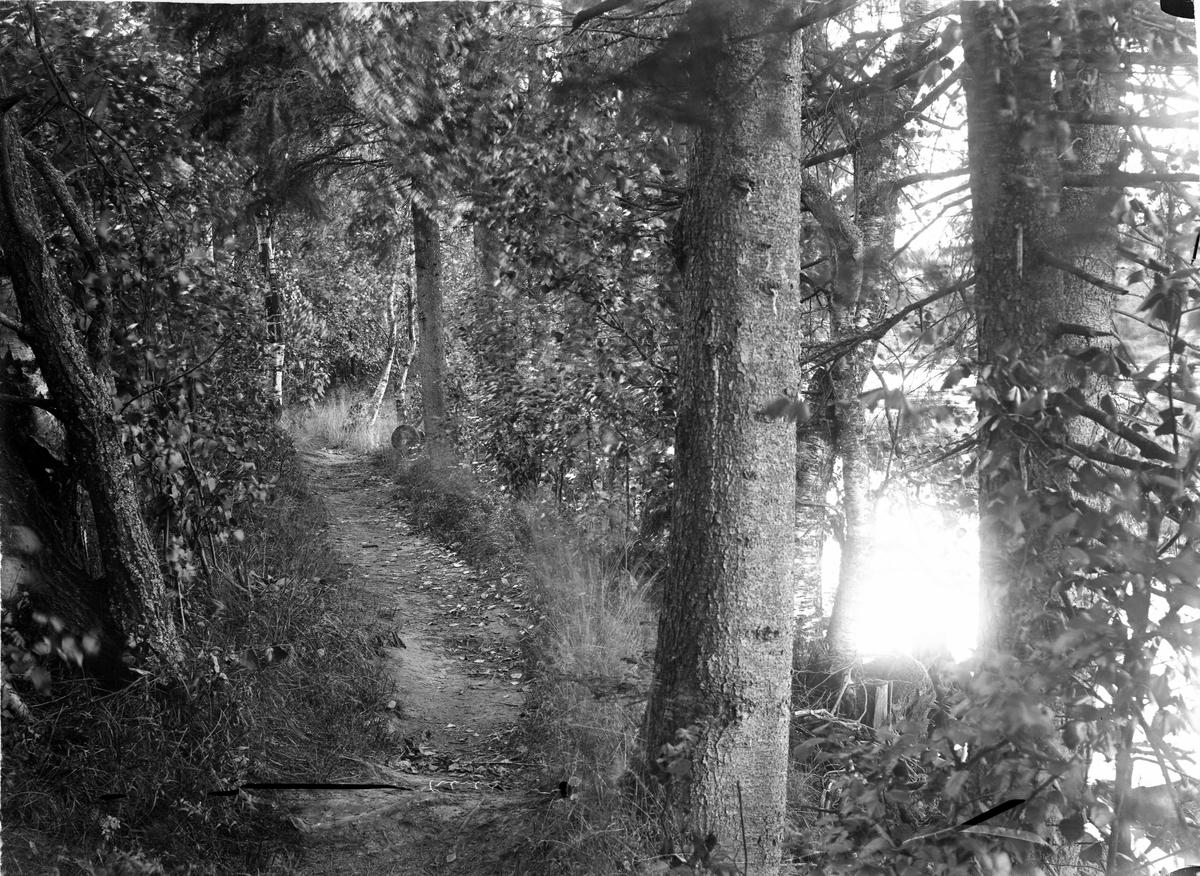Sti i skogen - Dorotheen Busk