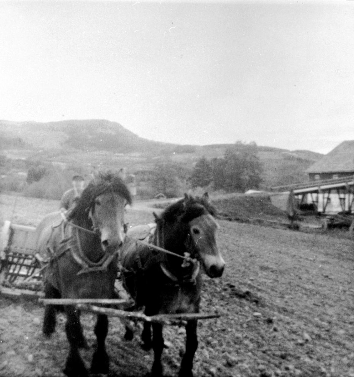 Våronn på Jemtland østre, Brumunddal. Jacob Jemtland sår med to hester.