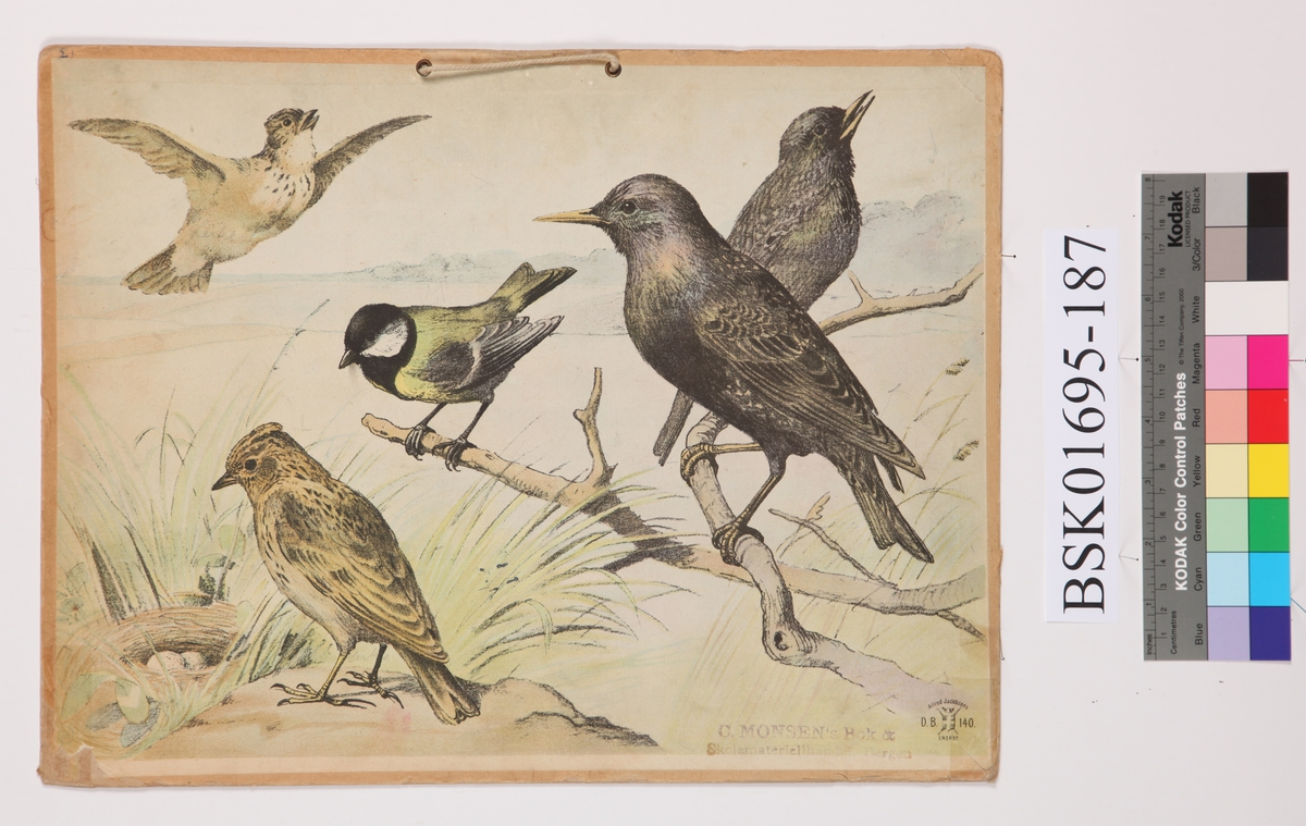 Fugler. Kjøttmeis, Lerke og Stær