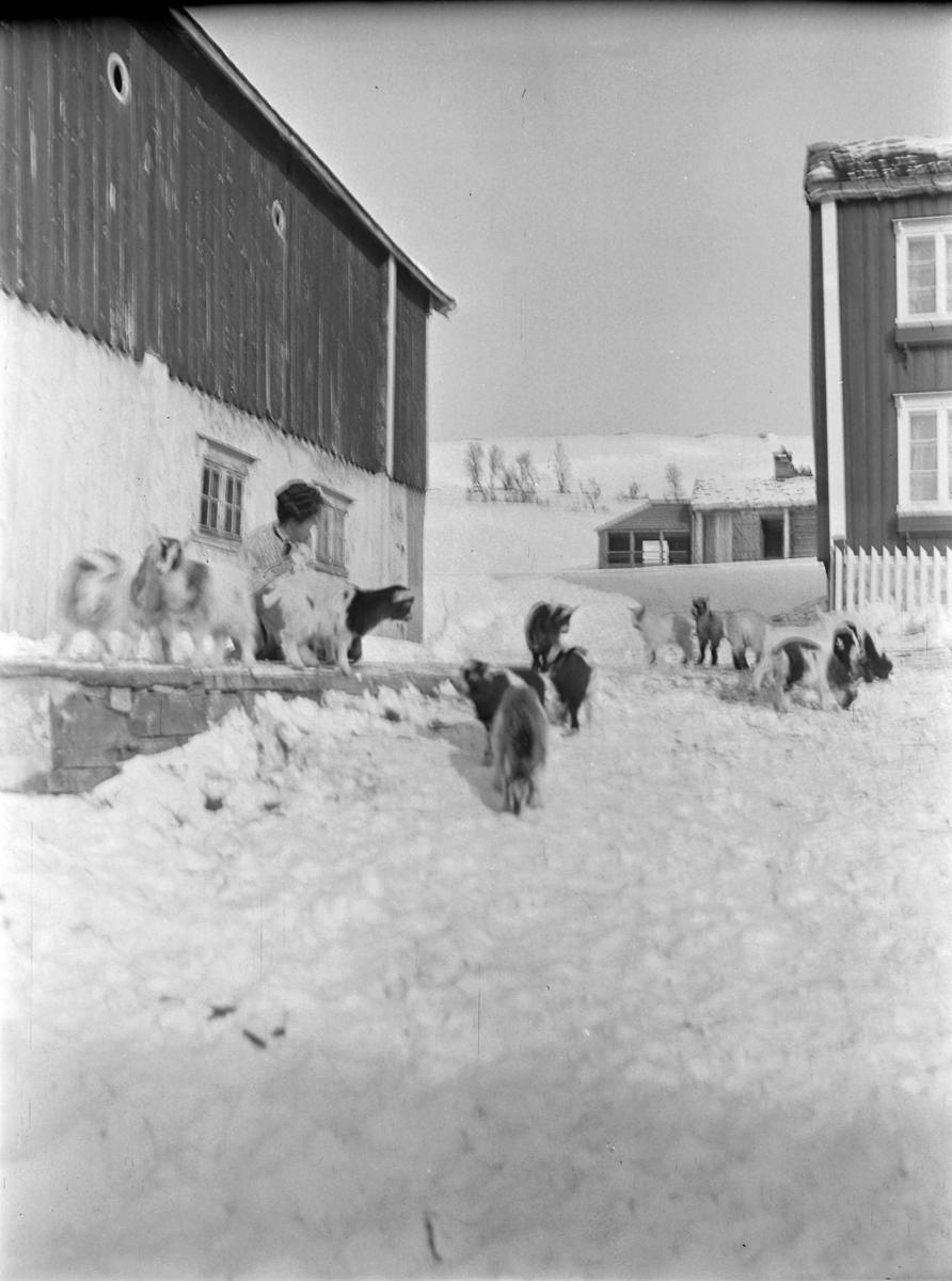 Vinterbilde fra Songli gård.