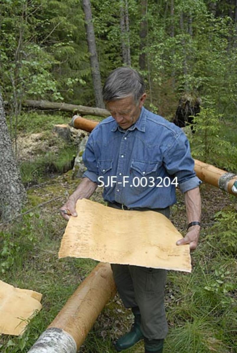 Trygve Løvseth fra Åsnes i Hedmark viser et neverflak han nettopp hadde flekket fra ei nyfelt bjørk.  Han fikk tillatelse fra grunneier til å hogge noen fine trær for å ta never til sløydarbeidene sine. Fordelen med å felle trærne er at nevra kan tas fra hele stammen. Nevra må tas like etter at bjørka er felt. Det er også mulig å ta never uten å felle treet, men da må man passe på ikke å skade underbarken. Det dannes et nytt, tynt neverlag hvert eneste år. Er nevra for tjukk kan den deles. Kvaliteten på nevra er avhengig etter hva slags mark bjørka vokser på. Bjørk i granskog gir den beste og seigeste nevra. Bjørk på myr får sprøere og brunere never avhengig av jordsmonnet på stedet. Nevra tas i mai og juni når sevja går om våren. Det er også mulig å ta never om vinteren. Vinternever skal være ekstra sterk. Bildet viser Trygve Løvseth når han tar flaknever. Bildet er tatt den 19. 06. 2010. Fotografiet inngår i en serie med nummer SJF-F. 003071-SJF-F. 003328.