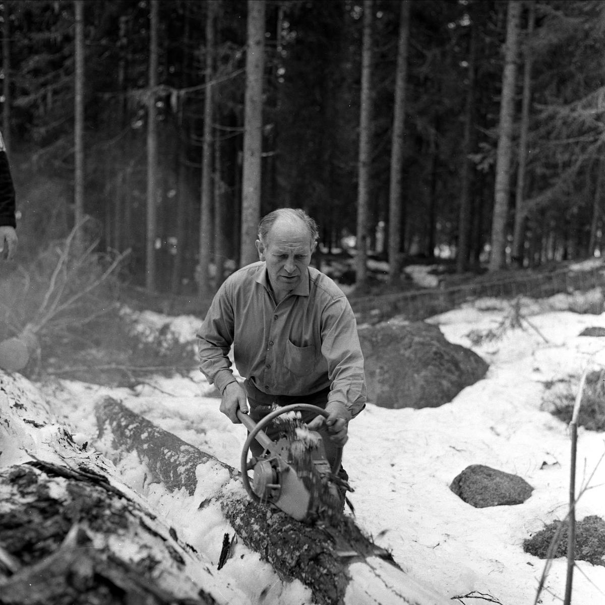 Menn arbeider med motorbarkespade i skog, april 1963.
