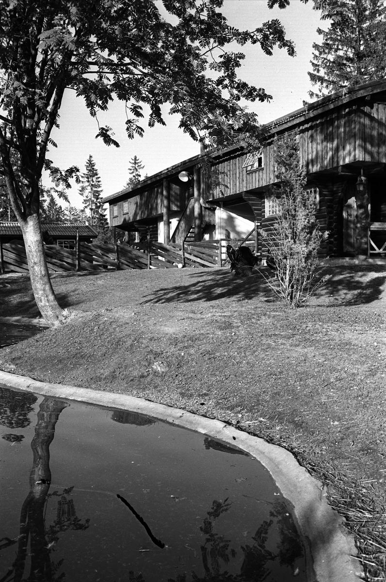 Fra Oslo juni 1962. Vannspeil med bygning i bakgrunnen på Ballsletta.