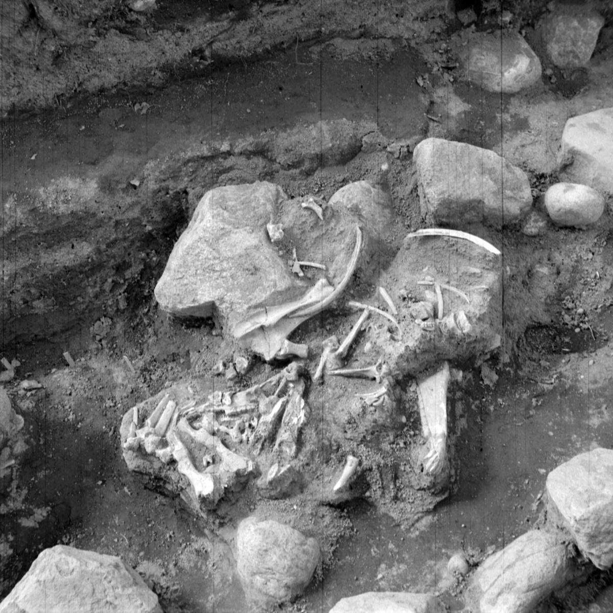 Prästgården, grav 3 - Arkeologi Gamla Uppsala 1973