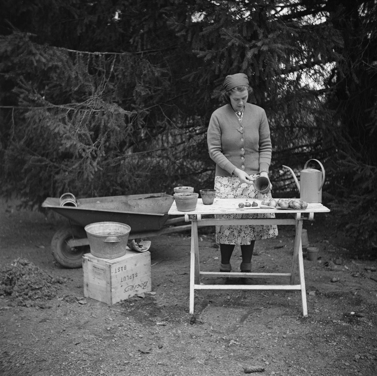 """""""Fröken Karlsson"""" visar plantering av blomlökar, Bergsbrunna, Uppsala 1939"""