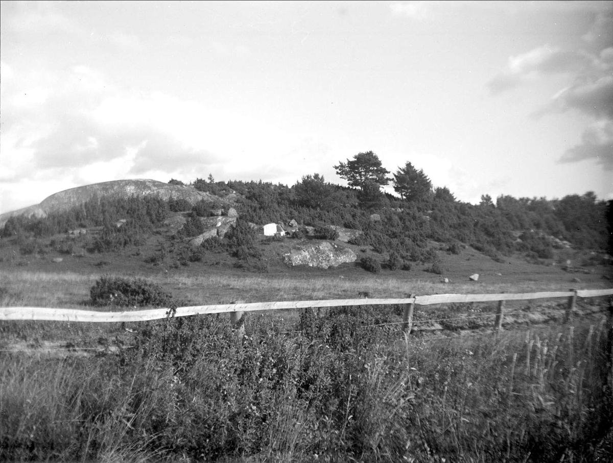 Enbacke i  Fågelsången, Lövstaholm, Odensala socken, Uppland i september 1931