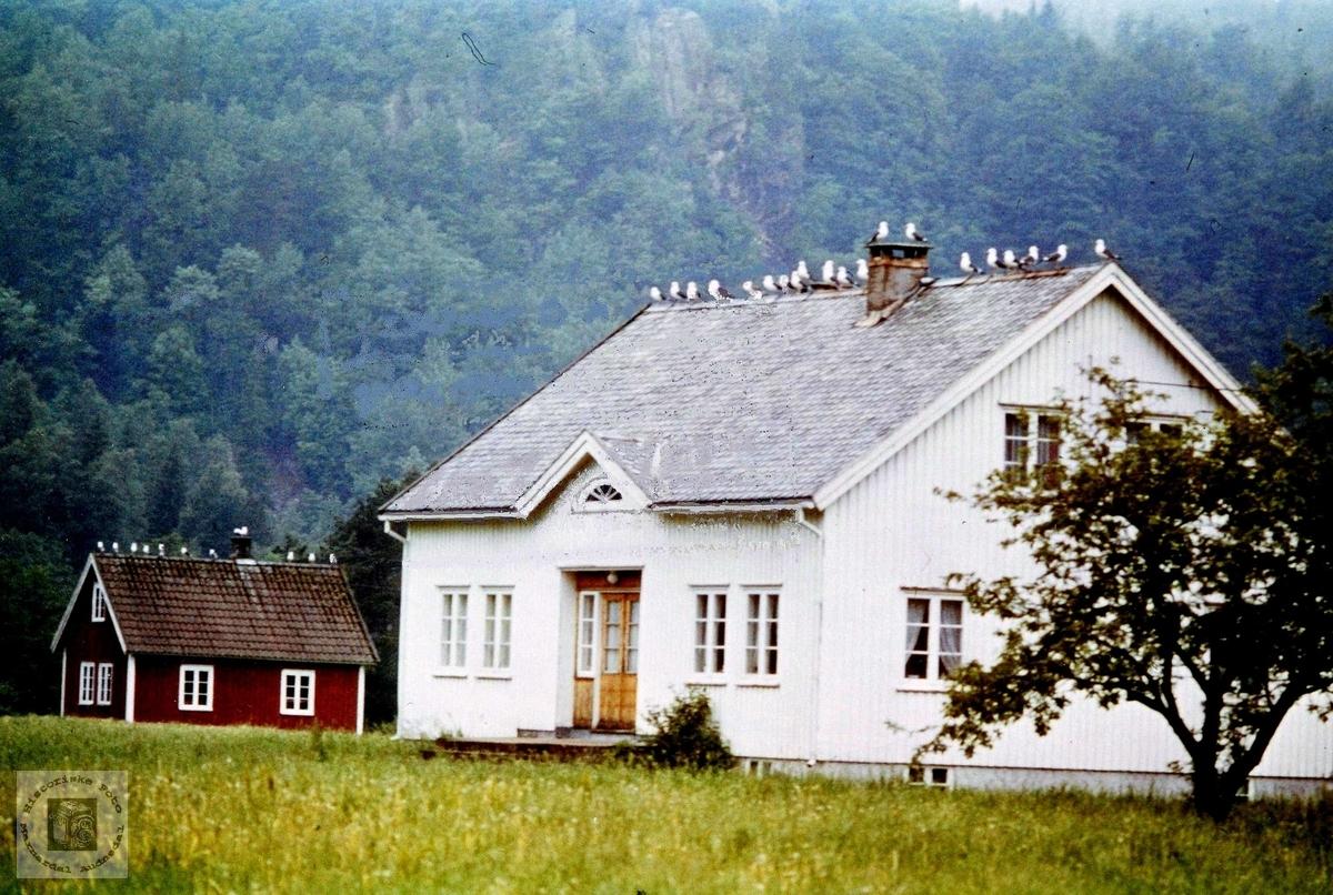 Hus på Viblemo pynta med måker. Audnedal.