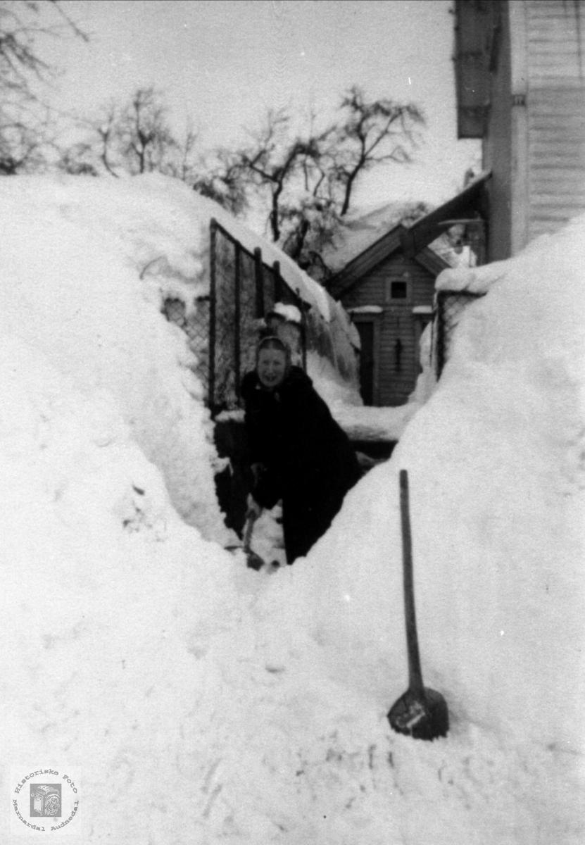Snøvinter Se bilde nr MABFB1522