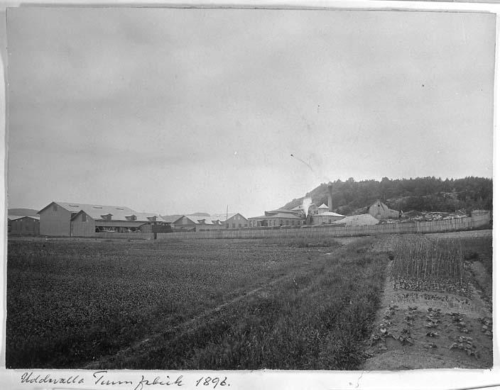 "Text på kortet: ""Uddevalla Tunnfabrik 1896""."