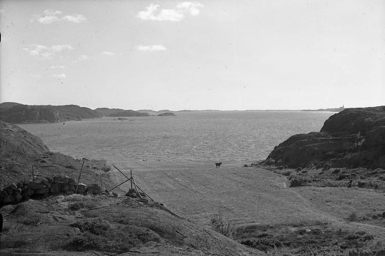 Häst på bete, Brevik, Bokenäs 1955