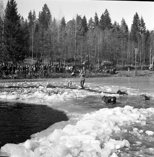 """Enligt notering: """"Isuppvisning Bjursjön 11/3 -59""""."""