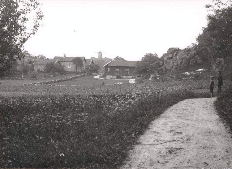 """Noterat på kortet: """"TORÖD KLÖVEDAL TJÖRN"""". """"FOTO (D20) DAN SAMUELSON 1924. KÖPT AV DENS. DEC.58""""."""